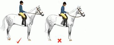vad är det för fel på hästen